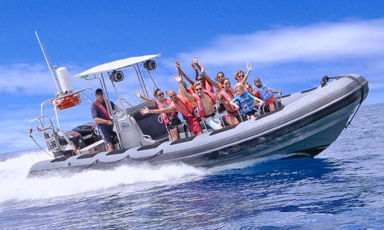 Amazing Powerboat Adventure & Snorkel