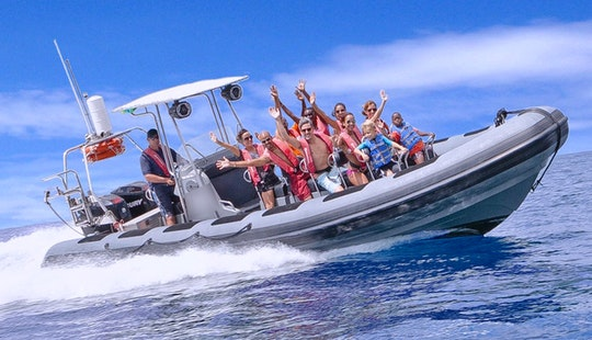 Amazing Powerboat Adventure & Snorkel