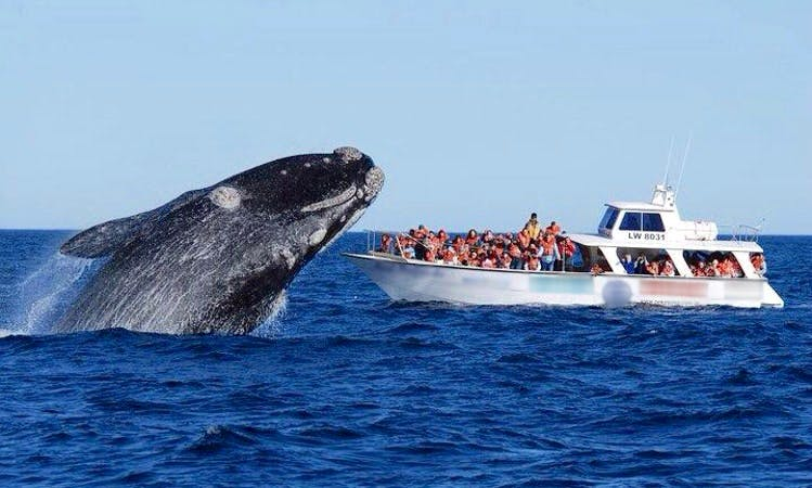 Whale Watching Tour in Puerto Piramides, Argentina
