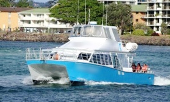 Power Catamaran Whale Watching Trips In Tweed Heads South, Australia