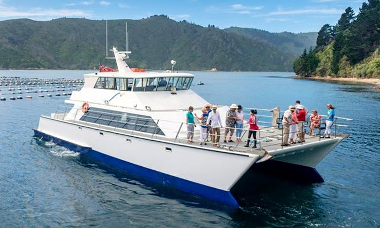 """MV Odyssea"" Cruising in Marlborough, New Zealand"