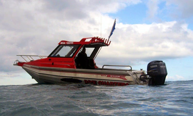 """25' """"Southern Comfort"""" Boat Diving, Private Charter Hire in Wellington"""
