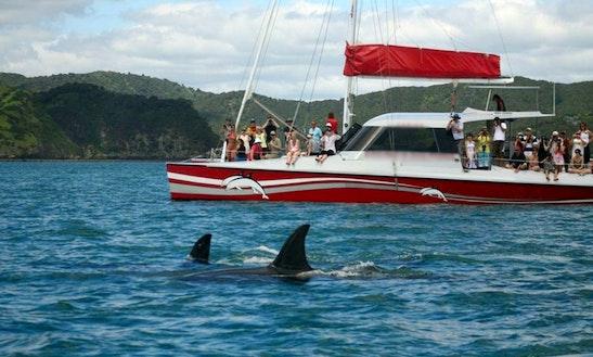 Cruising Catamaran In Paihia, New Zealand