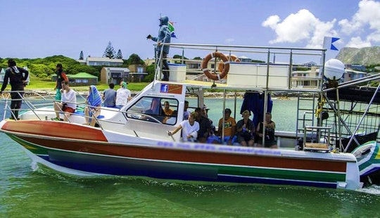 36' Shark Diving Boat In Gansbaai