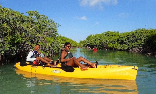 Pedal Kayak & Power Snorkeling Tour In Mangel Halto Reef