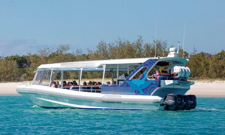 Enjoy Whale Watching Tours in Urangan, Queensland