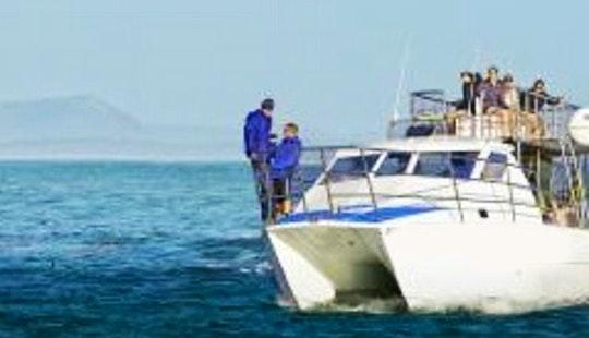 Passenger Boat Rental In Van Dyks Bay
