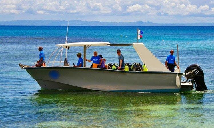 Enjoy Whale Watching Tours in Toamasina, Madagascar