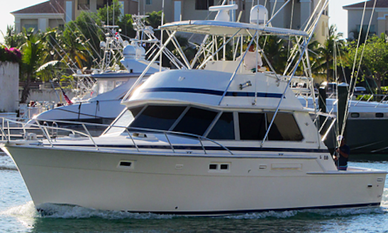Enjoy Fishing In Punta Cana, Dominican Republic On 42' Bertram Sport Fisherman