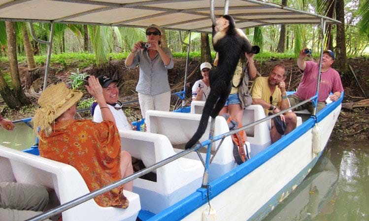 Wildlife Trips on Damas Island Estuary in Quepos, Costa Rica