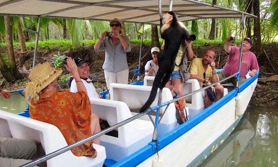 Wildlife Trips On Damas Island Estuary In Quepos, Costa Rica