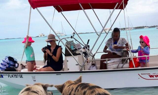 Swiming Pigs Boat Tours in Exuma Islands, The Bahamas