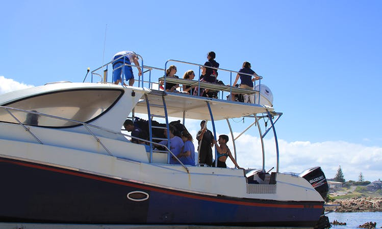 White Shark Diving Boat Tour in Van Dyks Bay, South Africa