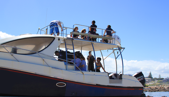 White Shark Diving Boat Tour In Van Dyks Bay, South Africa
