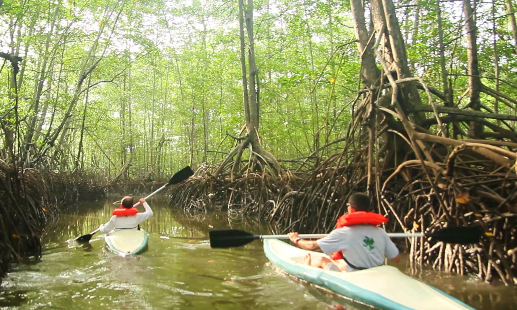 Enjoy Kayaking in Provincia de Puntarenas, Costa Rica