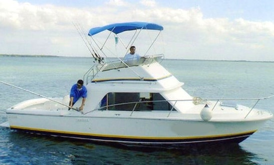 31' Phoenix Fishing Charter In Cancun