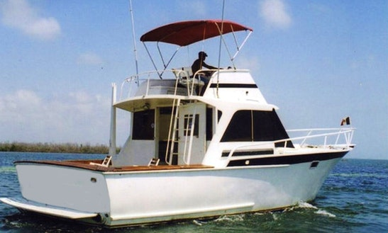 38' Bertram Fishing Charter In Cancun