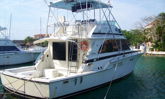 Captained Sport Fisherman Charter In Playa Del Carmen, Mexico