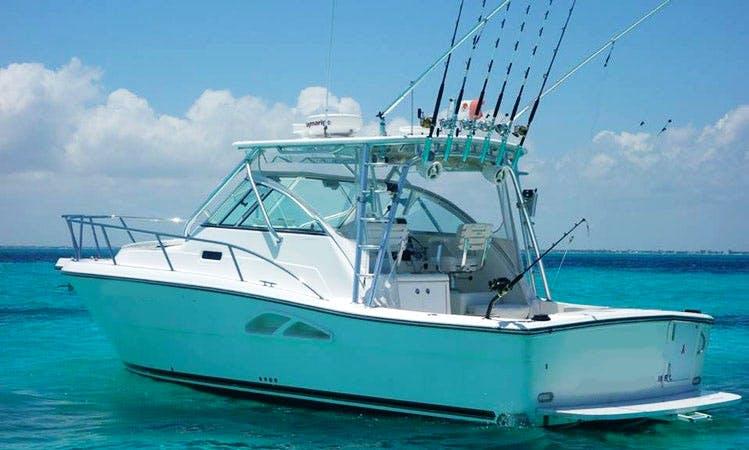 comodoro sport fishing charter in Isla Mujeres
