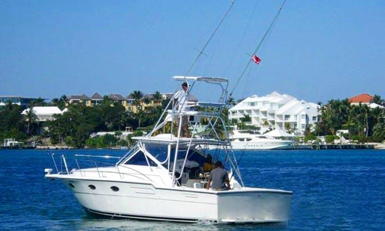 """Enjoy 36 ft Tiara Yacht """"Chubasco V"""" in Nassau, New Providence"""