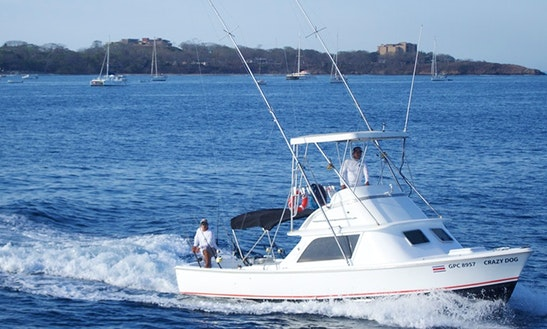 Enjoy Fishing In Tamarindo, Costa Rica 31' Bertram On Sport Fisherman