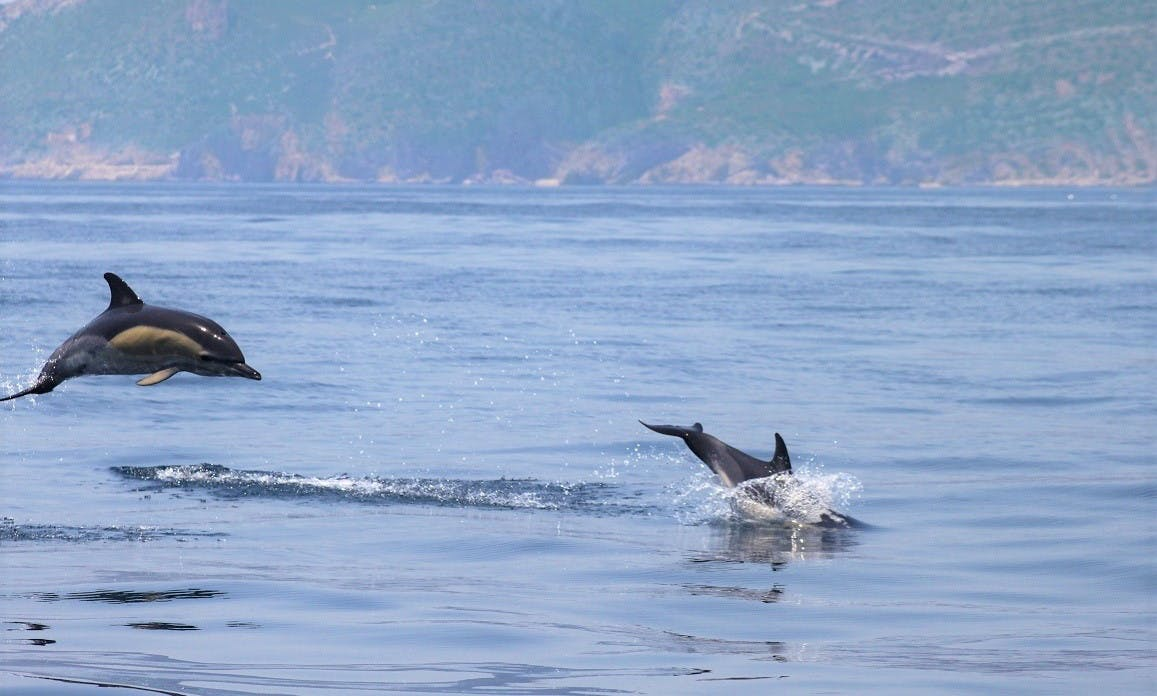 Bartholomew Diaz Expedition - Dolphin Watching from Lisbon