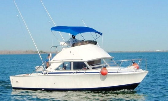 31' Bertram Sport Fisher Charter In Cancun