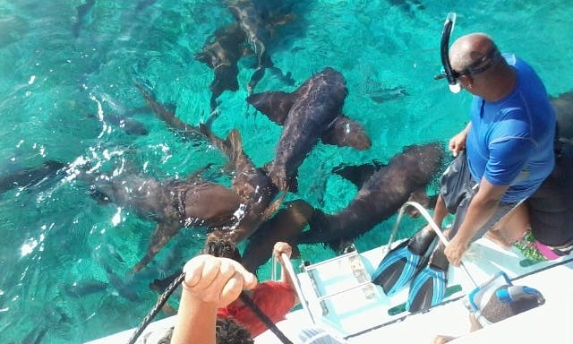 Adrenaline Fill Tour - Snorkeling with sharks