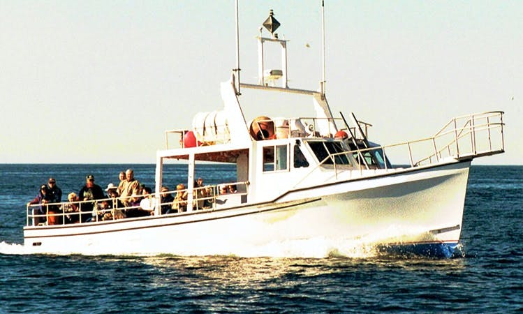 Charter Tours On 42' Fiberglass Transport Yacht In Saint Petersburg