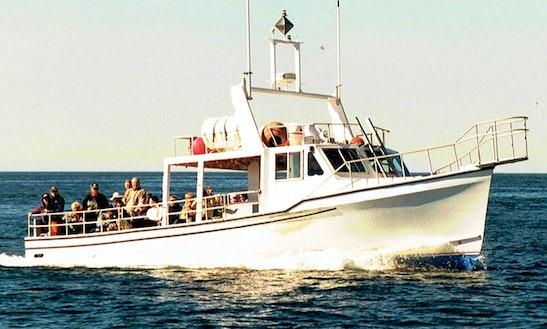 Charter Tours On 42' Fiberglass Transport Yacht In Saint Petersburg