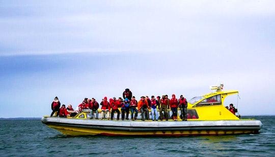 52' Rib Boat