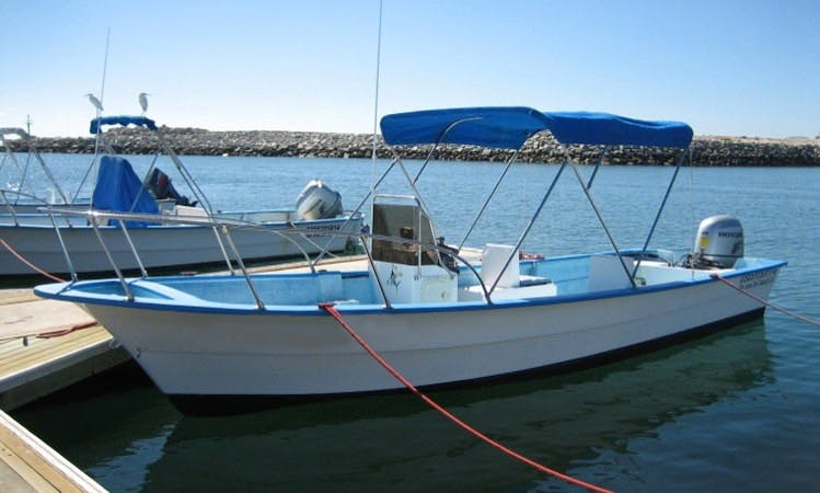22' Super Panga Fishing Charter