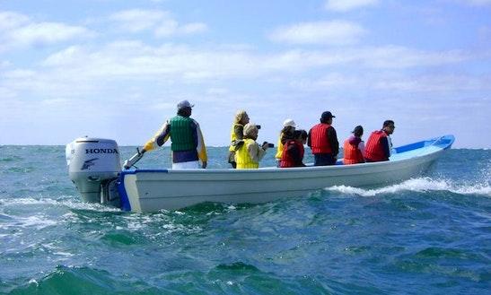 Panga Center Console Boat In Cabo San Lucas, Mexico