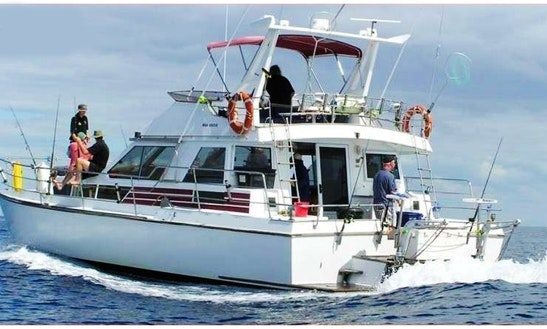 42' Fishing Charters In Whangaraoa, Auckland
