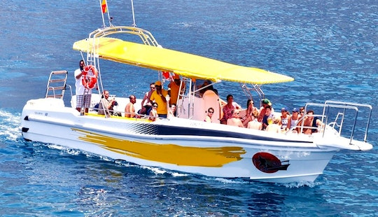 Dolphin Watching On Masca Express At Canarias Islands, Spain