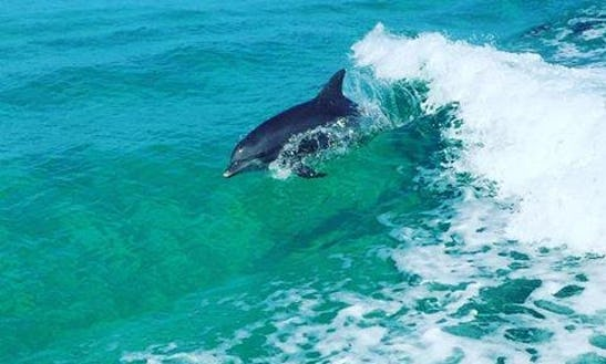 Enjoy Private Dolphin Tours On 27' Sea Cat Catamaran Boat In Panama City, Florida