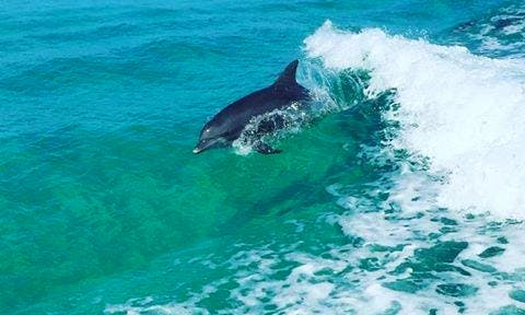 Enjoy Private Dolphin Tours On 27' Sea Cat Catamaran Boat In Panama City, Florida