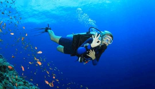 Enjoy Scuba Diving In Potrero, Costa Rica