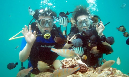 Enjoy Diving In Denpasar Selatan, Indonesia