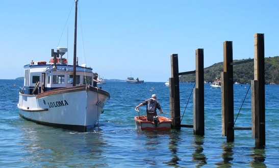 Enjoy Fishing In Stewart Island, New Zealand On Trawler