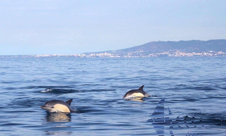 Gil Eanes Expedition - Sea Safari from Lisbon