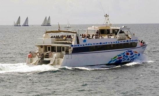 Catamaran Dolphin Tour In Calvià