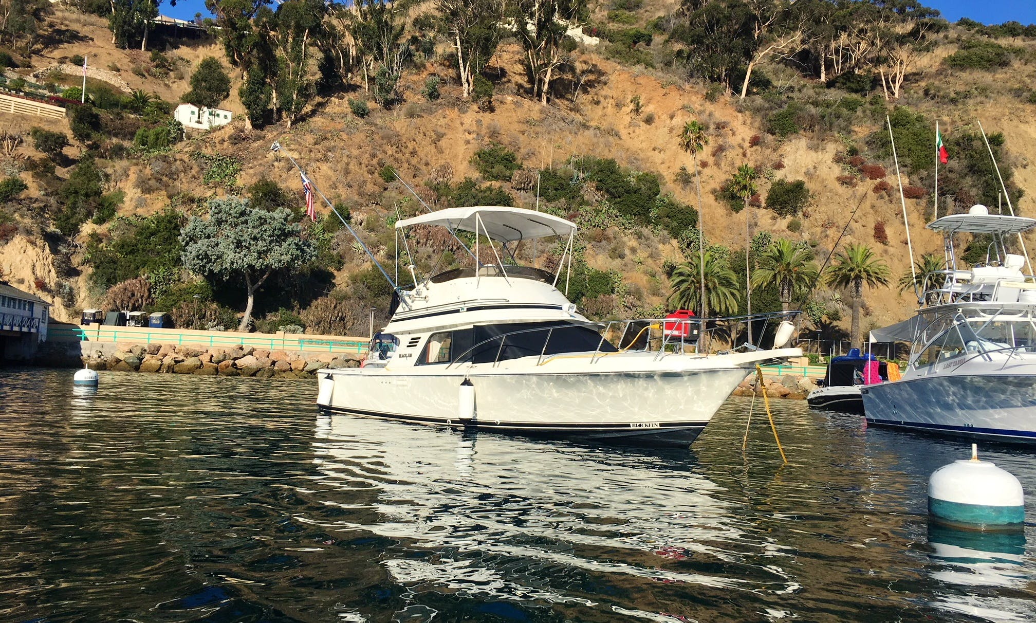 Captained Blackfin 29' (32' Overall) Classic in Newport Beach