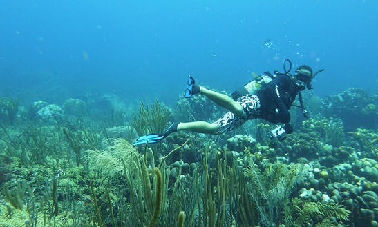 Enjoy Diving In Le Marin, Martinique