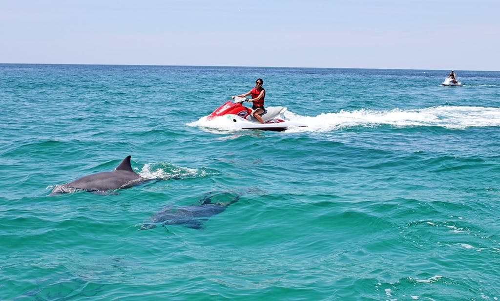 Waverunner dolphin Tour