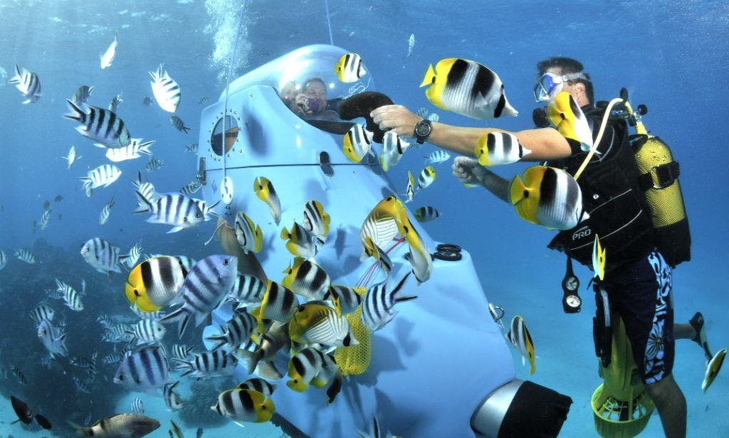 Unforgettable Underwater Experience in Bora Bora, French Polynesia
