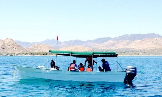 Snorkeling Boat Tour In Cabo Pulmo