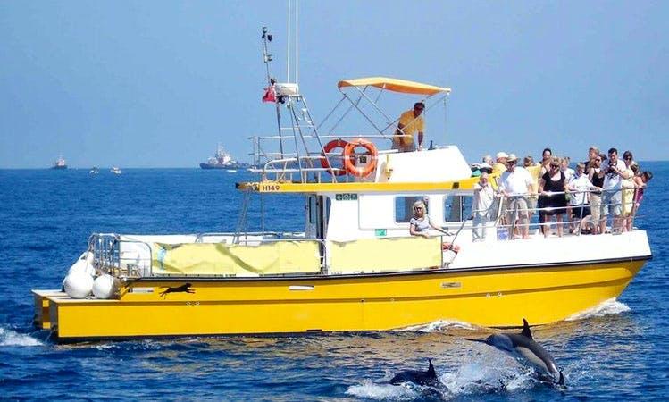 Dolphin Tours in Gibraltar, Gibraltar