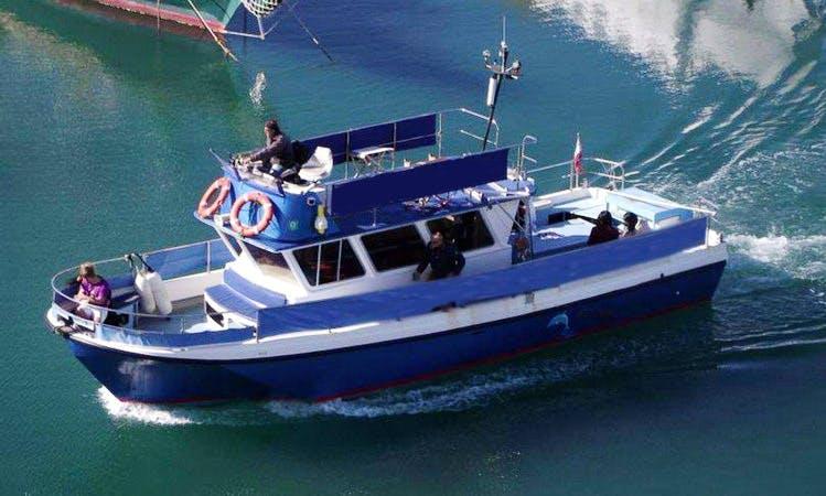 39' Dolphin Safari Boat In Gibraltar