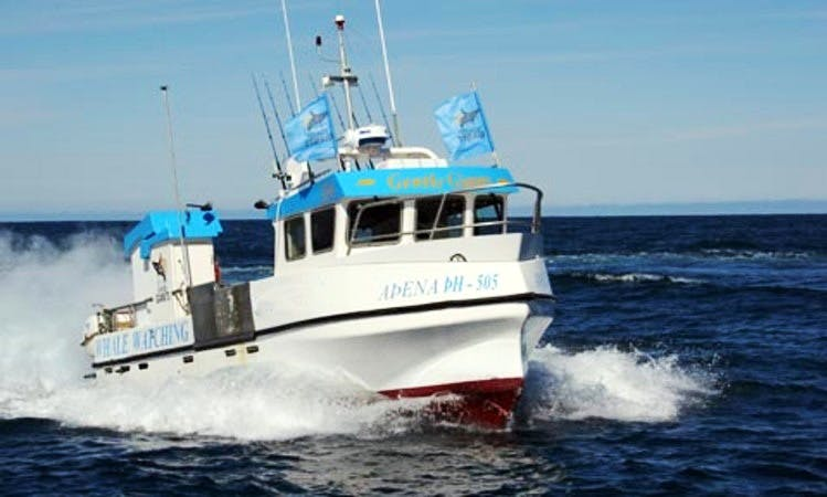 Fishing boat charter in Husavik, Iceland